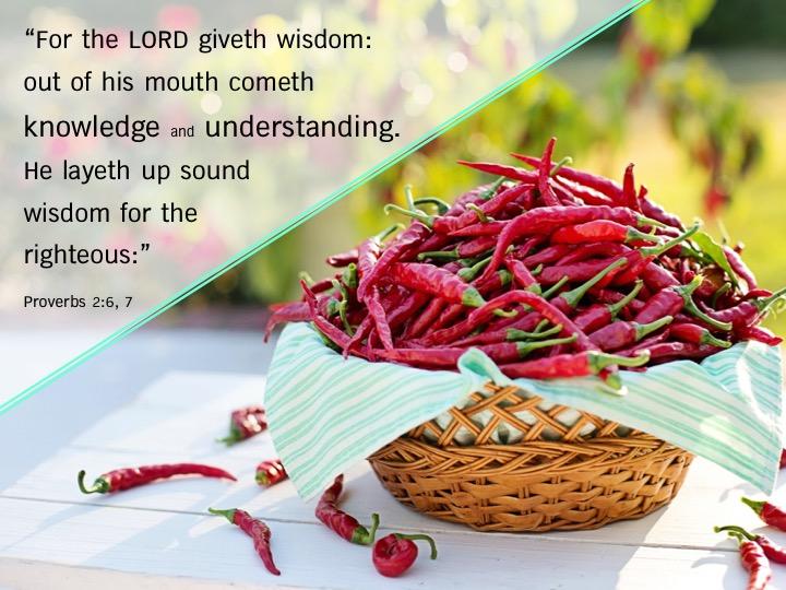 Proverbs 2 6,7 English.jpg