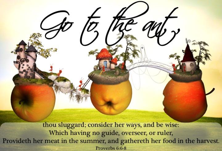 Proverbs 6 6-8 English.jpg