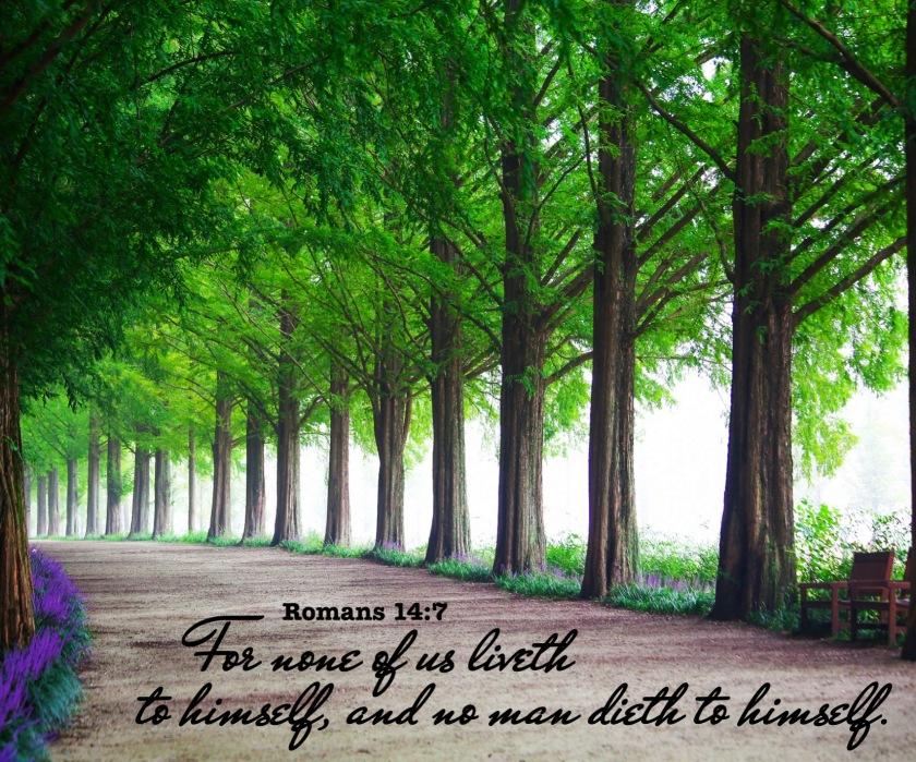 Romans 14 7 English