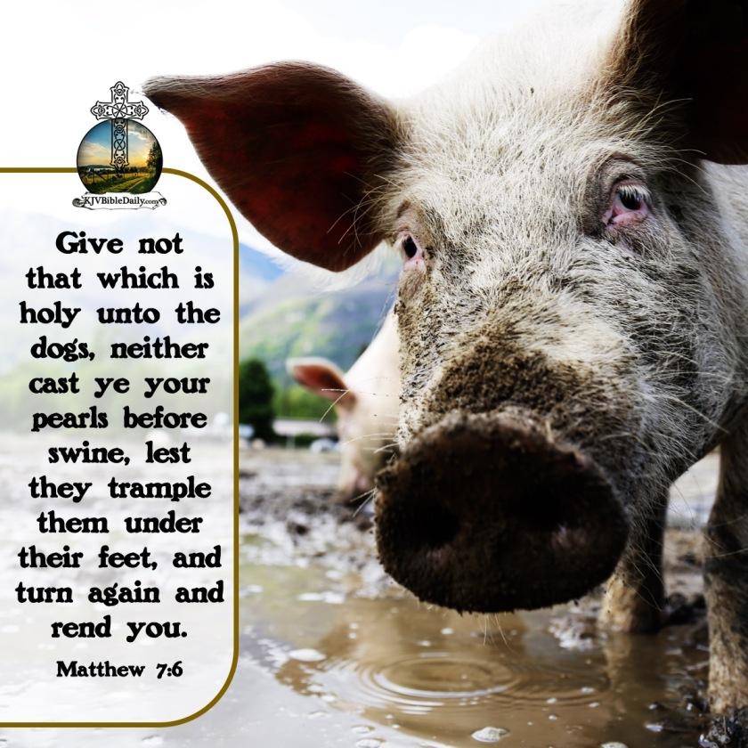 Matthew 7 6 KJV.jpg