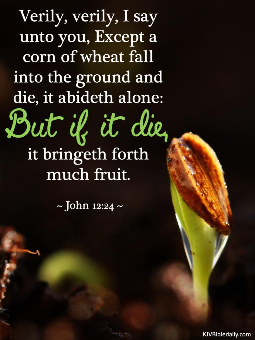 John 12-24 KJV.jpg
