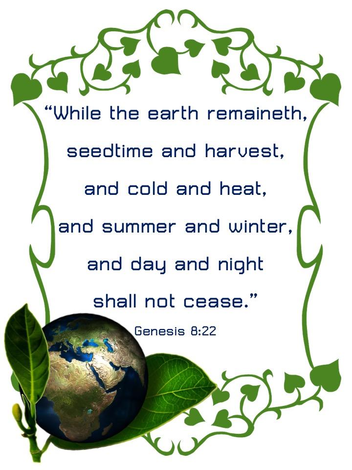 Genesis 8-22 English