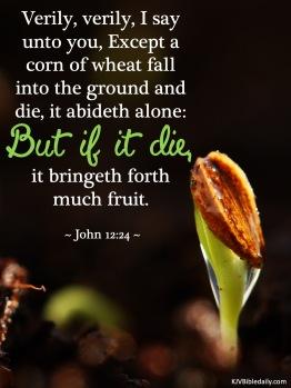 John 12-24 KJV