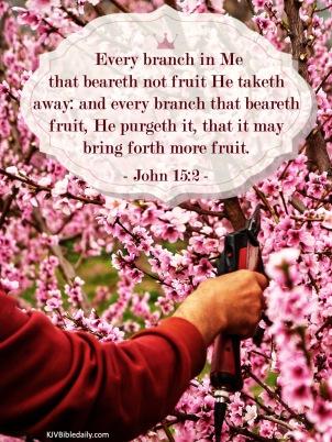 John 15-2 KJV