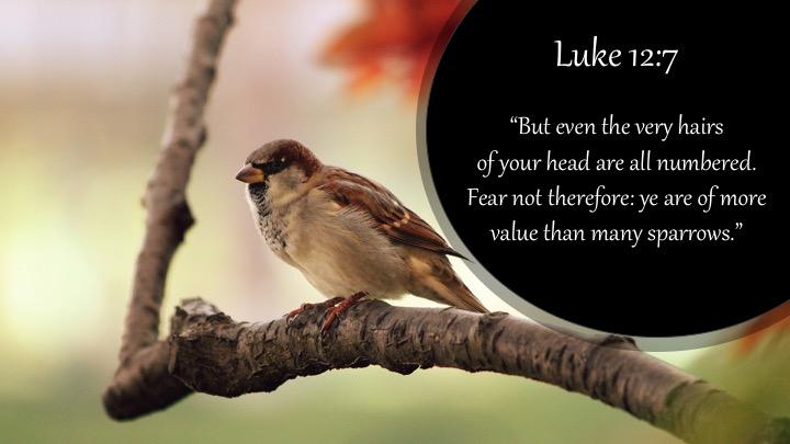 Luke 12-7 English