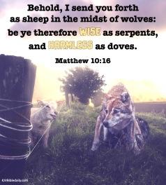 Matthew 10-16 KJV