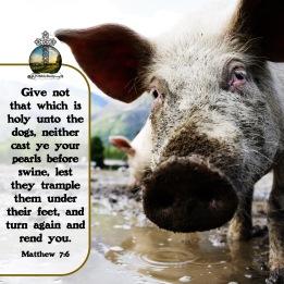 Matthew 7 6 KJV