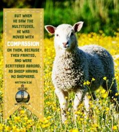 Matthew 9 36 KJV