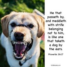 Proverbs 26 17 KJV