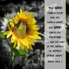 Psalm 146 8, 9 English