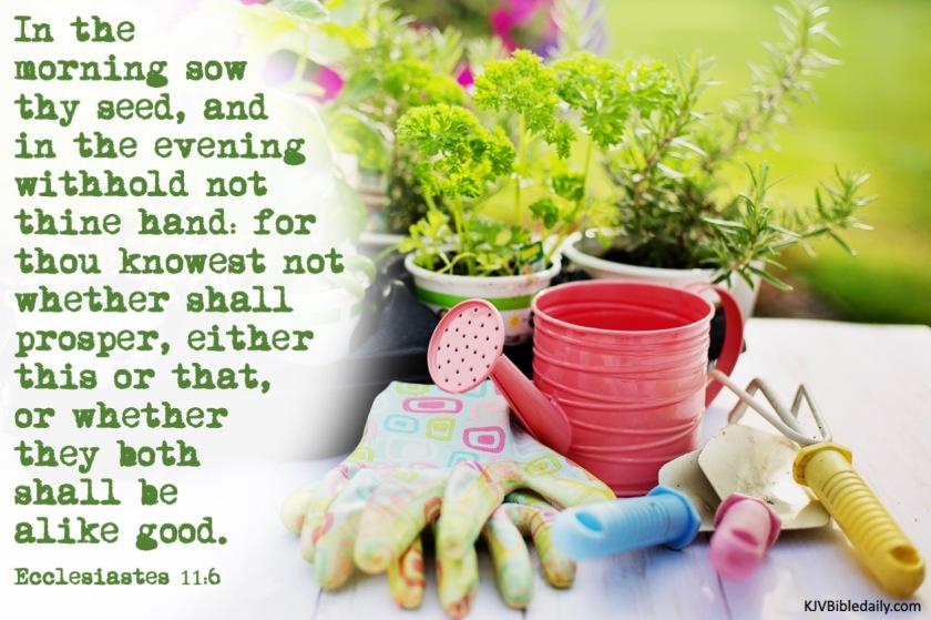 Ecclesiastes 11-6 KJV