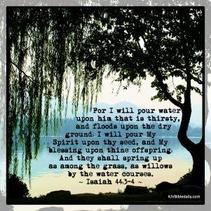 Isaiah 44 3_4 KJV