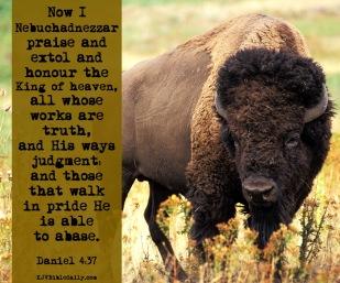 Daniel 4-37 KJV